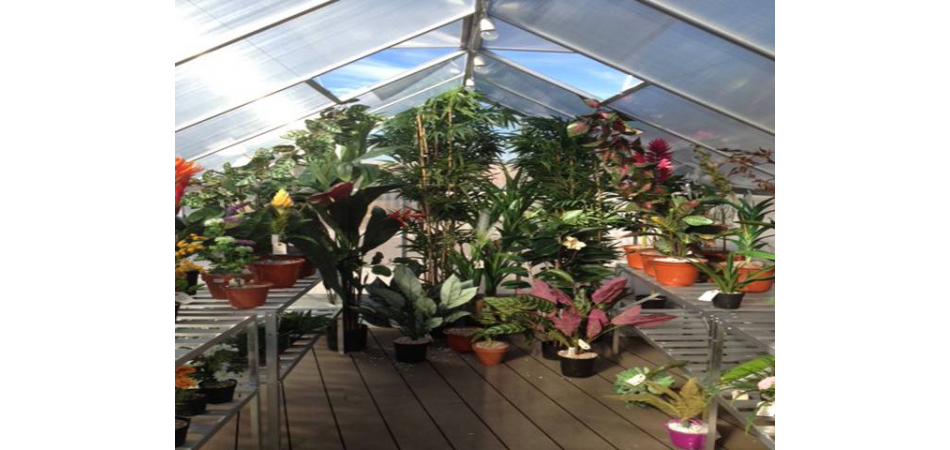 Greenhouse of tropical Mutisianas. Herbarium of artificial plants, Madrid